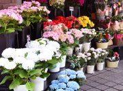 【開店】フローリストJIN、柏市役所通りにスタイリッシュなお花屋さん