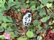 ふじさわアートフェス野外展覧会の魅力@旧モーガン邸庭園(藤沢市)