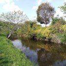 【下飯田~いずみ中央】新緑が爽やかな穴場のお散歩コースへ♪和泉川沿い