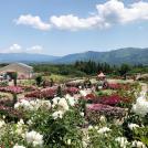 【大隅・鹿屋市】「かのやばら祭り 2019春」は6月2日まで。5月17日~19日は満開のバラ&花火ショーも!!