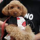 【神戸南京町】ペット同伴入店歓迎♪北京ダック付きコース