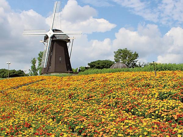 初夏の大阪 花カレンダー 美しい花に囲まれ心和む一日を