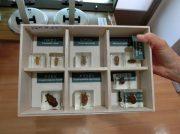 レアな昆虫の標本が楽しめる「倉敷昆虫館」に行ってみた!