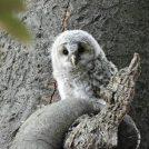 【野木町】「野木神社」はもふもふなフクロウの雛に会えるかもしれない癒しの神社