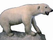 陸のモフモフ、海のツルツル? ほ乳類の姿や暮らし方を紹介
