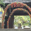 夏を彩る「深大寺鬼燈まつり」7/14(日)・15(月・祝)開催