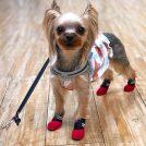 「犬の靴」デビュー!防災グッズとしても注目「犬用の靴や靴下」