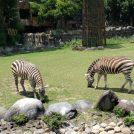 動物園へ行こう!4時間散策コース@愛媛県立とべ動物園