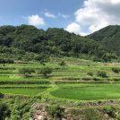 棚田に癒される小さな小さな旅@松山市藤野地区