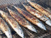 9/29(日)★おながわ秋刀魚収獲祭2019