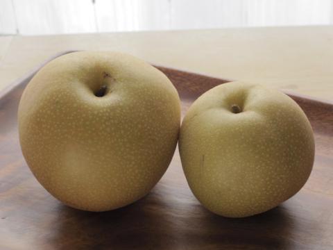 1908_pear