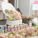 【開催日変更のお知らせ】9/22・23→9/28・29 lier 多肉フェスin愛媛 purikoro garden