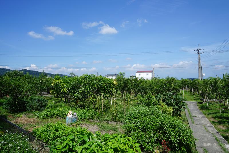苗栗県・公館郷のナツメ畑