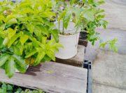 【青葉区中山台】園芸用品の品揃え豊富!もちろん鉢植えや切り花も
