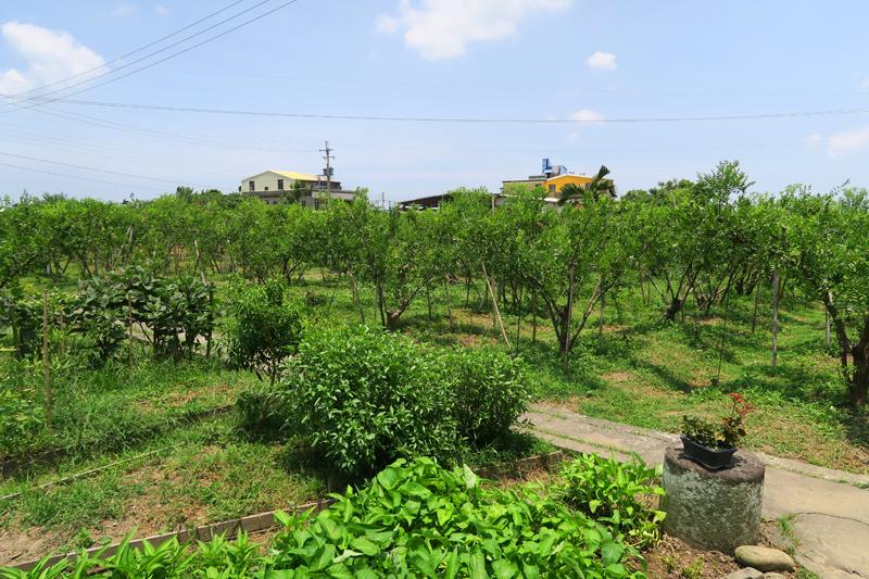 台湾苗栗公館のナツメ農園