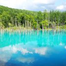 《北海道旅》美瑛まで15分。青い池まで30分!名古屋から行くには旭川直行便がおすすめ!宿情報あり
