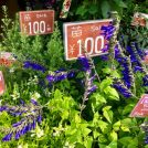 元町で100円苗が買える!!お得なお花屋さん「MOTOMACHI花こ(もとまちはなこ)」