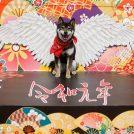 8/24(土)・25(日)「わんにゃんドーム2019」。ゲストに愛犬家ベッキー登場!