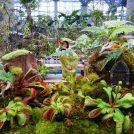 【大阪市】虫を食べる植物展/咲くやこの花館