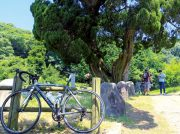 【クーポンつき】サイクリングの後は温泉&プール 東温市・遊びと癒しの観光スポット