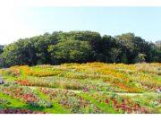 「秋の里山ガーデンフェスタ」開催中