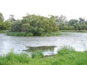 家族で癒される 天然の遊びスポット 東屯田川遊水地