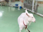 【西葛西】行船公園内の自然動物園には人気の動物たちが大集合!!