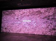 世界初公開!大阪中之島美術館開館プレイベント「新収蔵品サラ・モリス≪サクラ≫」へ行ってきました!