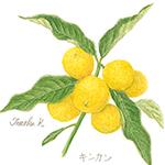 botanical-art-kinkan
