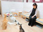 【NEW OPEN】猫の手を借りてオープンしました「猫好きルームもふもふ」