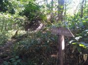 札幌市内で苔と沼の美しい風景に出会う「空沼岳」登山、紅葉時期も狙い目!