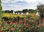 【神戸・明石・阪神間】バラやコスモスなど秋を彩る花スポット