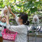 【特集】多摩エリアで楽しめる 味覚狩り&収穫体験(2019年版)