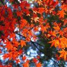 秋色に染まる景色に感動! 紅葉ガイド2019(大阪・北摂・京阪・南大阪)