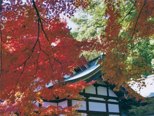 web若山神社2
