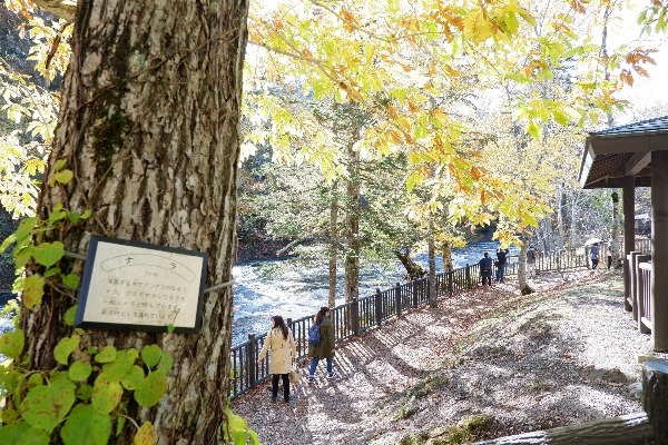 白扇の滝 歩道整備