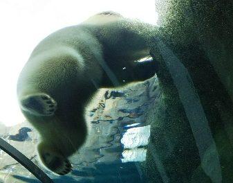 【円山】進化し続ける円山動物園!あなたの推しアニ(マル)は?