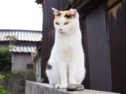 【笠岡】猫の楽園、真鍋島のほっこり体験記