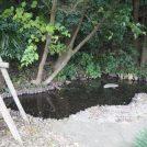心落ち着く!松戸市の湧き水「幸田湧水(こうでゆうすい)」で自然観察
