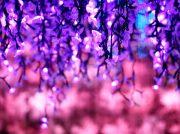 2019年10月19日(土)から。「なばなの里イルミネーション」今年は史上一番ロマンチック!?