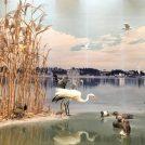 【我孫子市鳥の博物館】手賀沼のほとりの鳥の世界、家族みんなで鳥を知る!