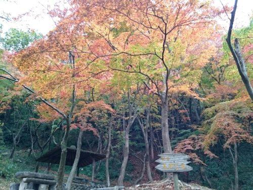 web用摂津峡公園紅葉