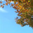 10/27(日)★不登校講演会 ~不登校~ 子どもの気持ちから考える
