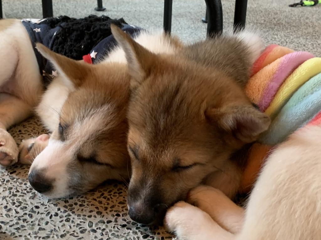 保護 犬 カフェ 名古屋