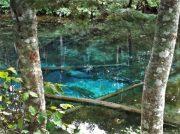 神秘のパワースポット「神の子池」でパワーチャージ