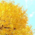 11/16・11/17のおでかけ・イベント情報をお届けします☆