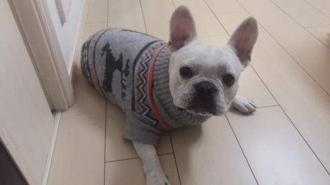 【H&M】クリスマスセーターで可愛すぎるアイテムを見つけたよ♡