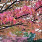子連れも大人も楽しめる仙台の癒やしの場所「榴岡公園」