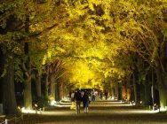 【立川】国営昭和記念公園「秋の夜散歩」に行ってきました!