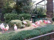 童心にかえれる(^^)小動物とのふれあいタイムも!とべ動物園